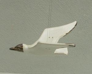 Flygande Skrattmås